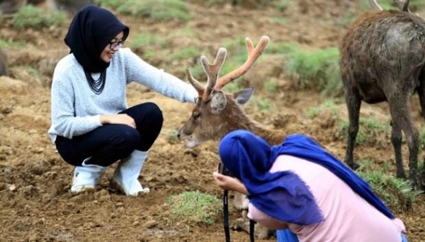 Indonesia fija meta de convertirse en mejor destino mundial de turismo halal hinh anh 1