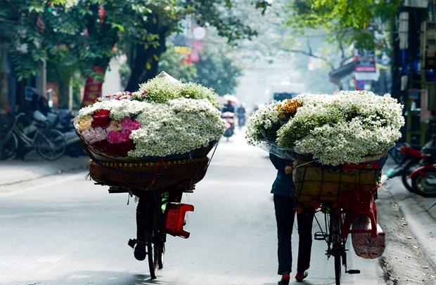 Hanoi: romantica ciudad de las margaritas hinh anh 1