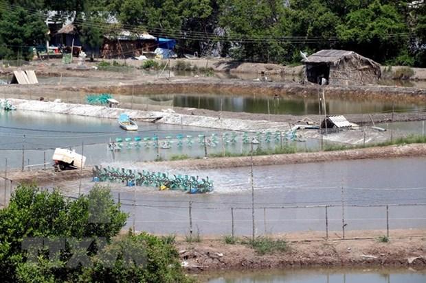 Agricultores vietnamitas se esfuerzan por enfrentar al cambio climatico hinh anh 1