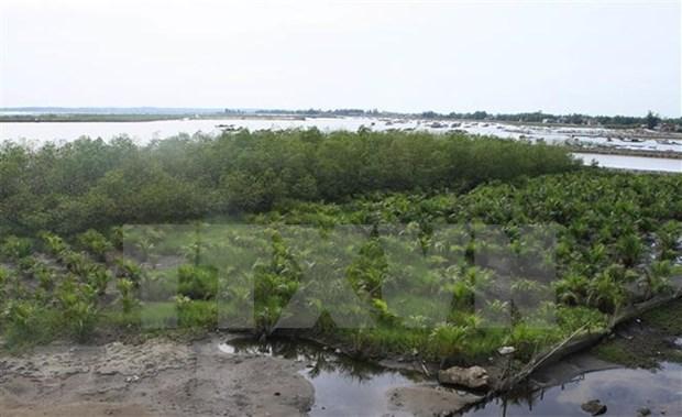Fortalecen resiliencia ante cambio climatico en zonas litorales de Vietnam hinh anh 1