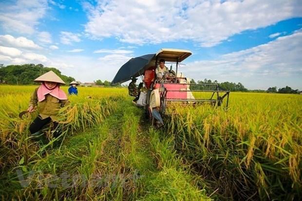 Destacan asistencia internacional a agricultores vietnamitas en respuesta al cambio climatico hinh anh 1