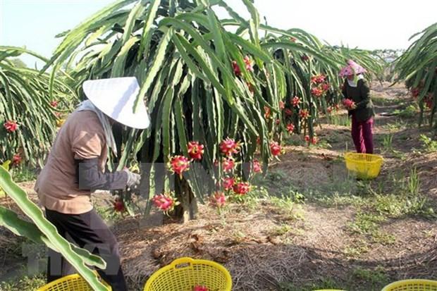 EVFTA facilita entrada en mercados europeos de productos agricolas vietnamitas hinh anh 1