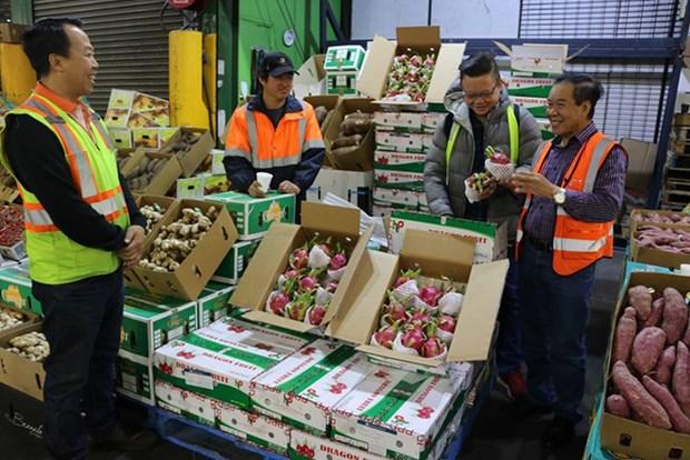 Buscan promover marcas de productos agricolas vietnamitas en China hinh anh 1