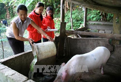 Hanoi cumple meta de reduccion de la pobreza con antelacion hinh anh 1