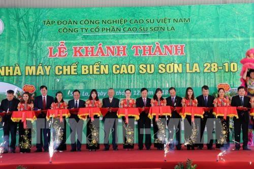 Ponen en operacion plata procesadora de latex en provincia vietnamita de Son La hinh anh 1