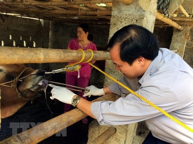 Los 10 hechos que marcaron la economia vietnamita en 2018 hinh anh 10