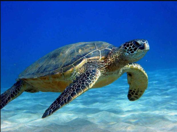Provincia vietnamita trabaja por proteger tortugas marinas hinh anh 1
