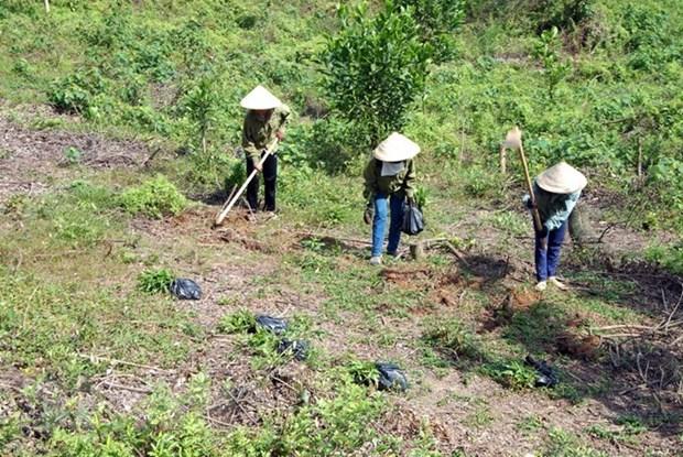 Binh Thuan se esfuerza a reducir la perdida y degradacion forestal hinh anh 1