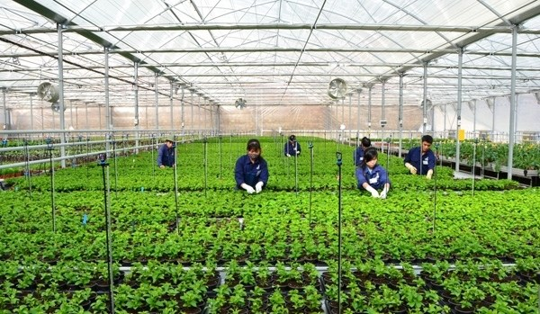 Vietnam cuenta con mas de nueve mil empresas agricolas hinh anh 1