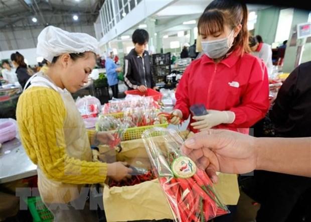 Vietnam por impulsar el desarrollo de la agricultura organica hinh anh 1