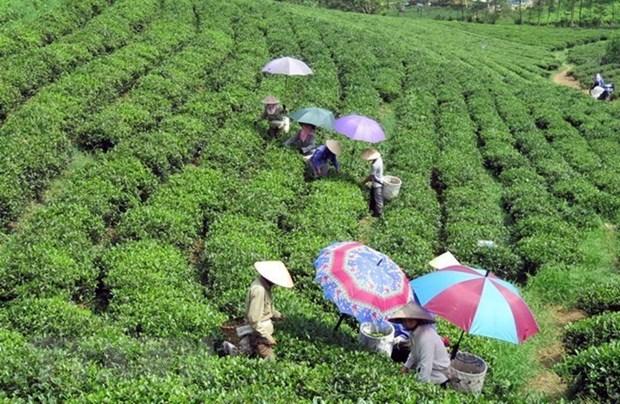 Tailandia busca oportunidades de colaborar con provincia vietnamita hinh anh 1