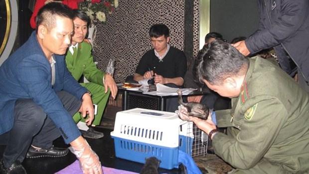 Vietnam rescata a dos ositos tibetanos de contrabando hinh anh 1
