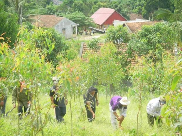 Mas de seis mil vietnamitas se benefician del programa UN-REDD hinh anh 1
