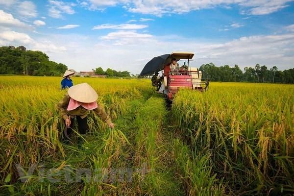 Apunta Vietnam a lograr este ano 21 mil millones de dolares por exportaciones agricolas hinh anh 1