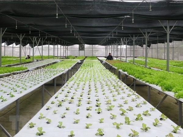 Buscan Vietnam y Australia impulsar la cooperacion en agricultura organica hinh anh 1