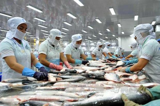 Vietnam, mayor exportador mundial del pescado Tra hinh anh 1