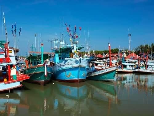 Espera Tailandia un futuro brillante para su industria pesquera hinh anh 1