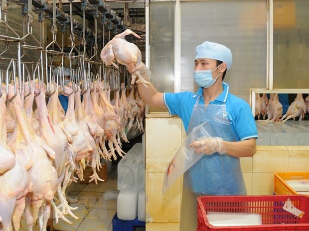 Evaluan en Ciudad Ho Chi Minh campana sobre la calidad de aves de corral europeas hinh anh 1