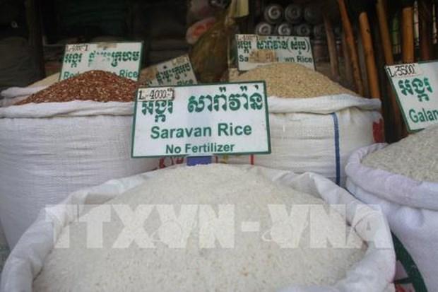 Preve China importar 400 mil toneladas de arroz de Camboya hinh anh 1