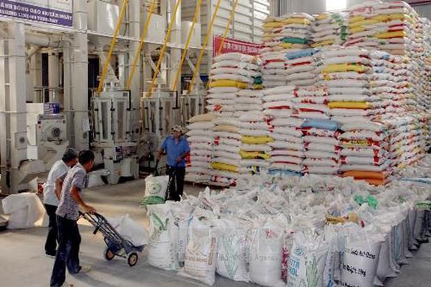 Suministraran arroz a cinco provincias vietnamitas en ocasion del Ano Nuevo Lunar hinh anh 1