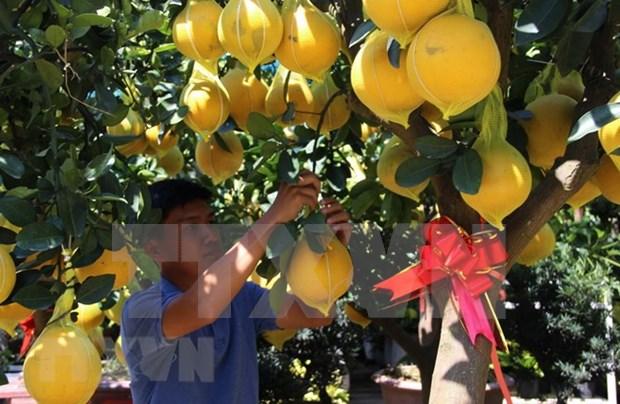 Pomelo Dien: especialidad de Hanoi hinh anh 1