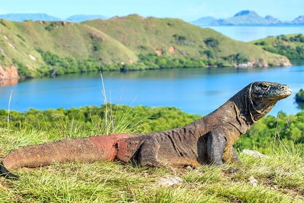 Indonesia cerrara temporalmente islas de dragon de Komodo hinh anh 1