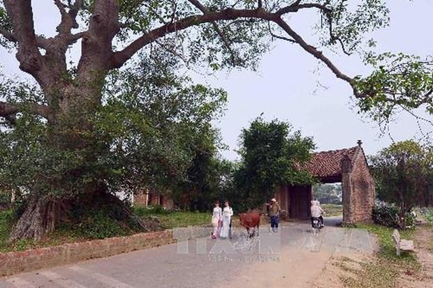 Casa de piedra de laterita mas antigua en flamante aldea de Duong Lam hinh anh 1
