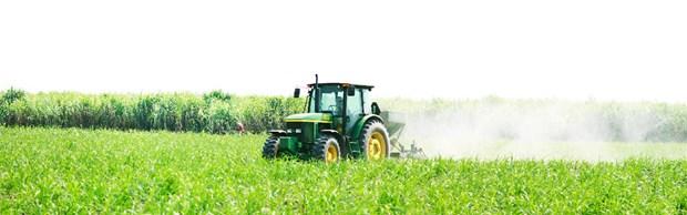TTCS: principal productor de azucar refinado hinh anh 1