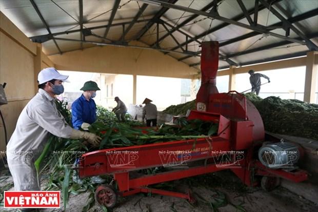 La mayor granja equina del norte hinh anh 1