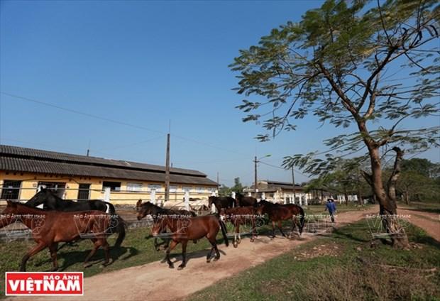 La mayor granja equina del norte hinh anh 2