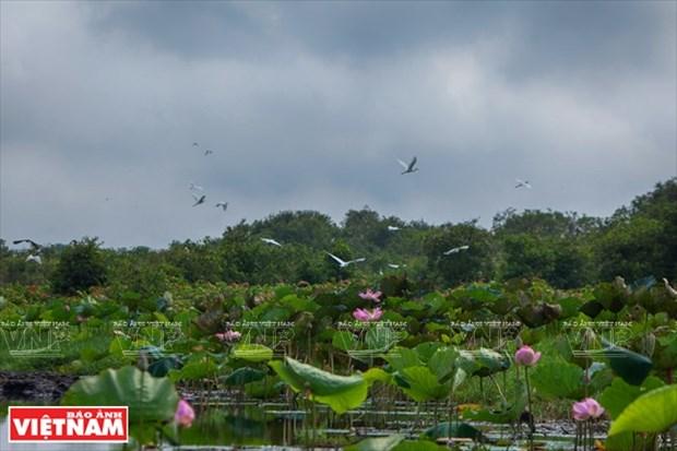 Humedal de Lang Sen, tipico ecosistema sudvietnamita hinh anh 1
