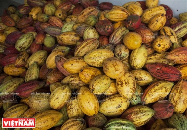 Chocolate hecho en Tien Giang hinh anh 2