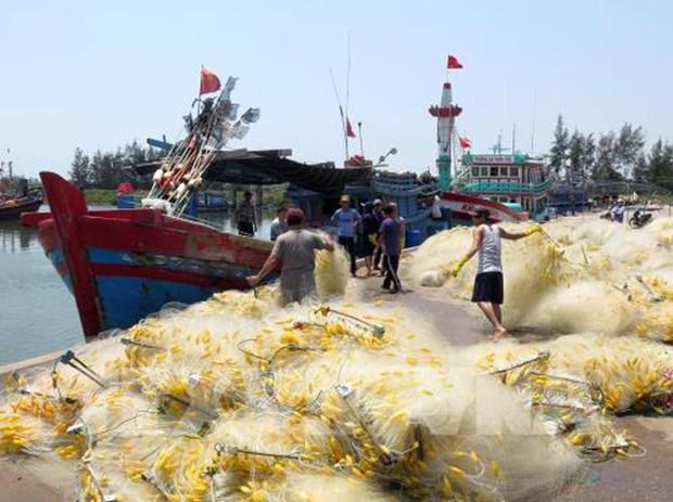 Aldea de procesamiento de mariscos de Sa Huynh en Vietnam hinh anh 1
