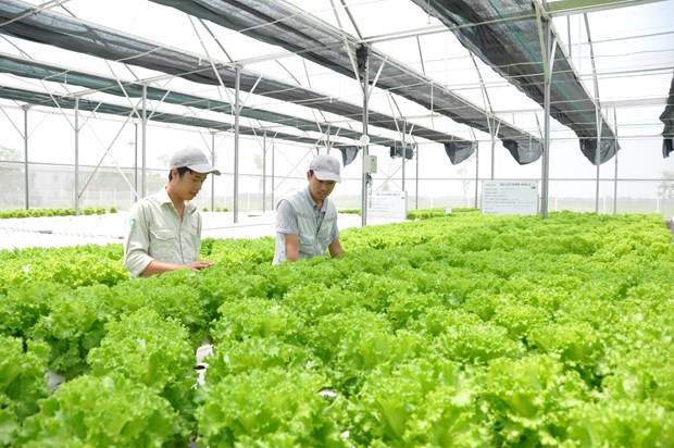Delco Farm: Un modelo de cultivo inteligente hinh anh 1
