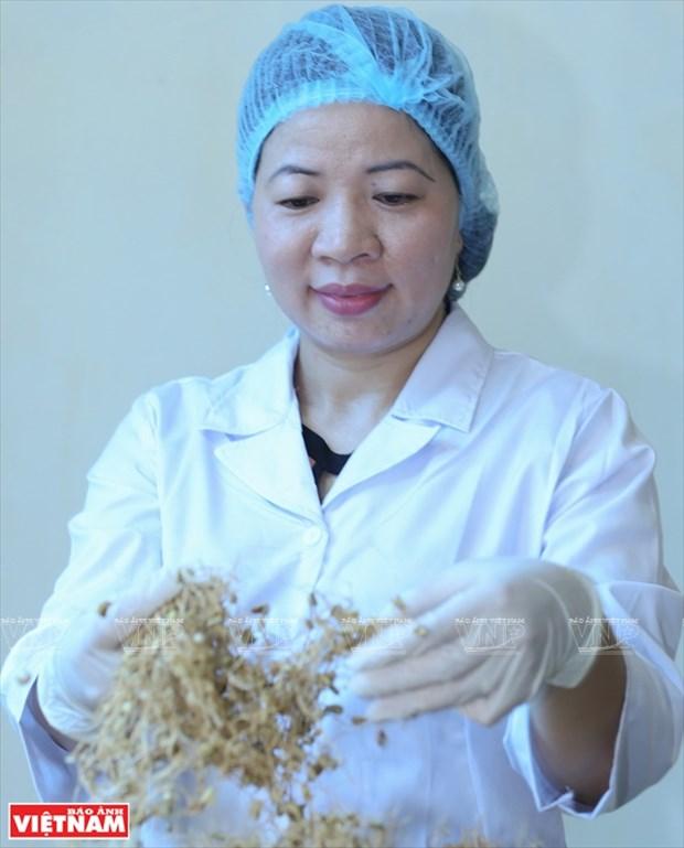 Cientifica vietnamita eleva el valor de las hierbas medicinales hinh anh 3