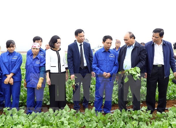 Insta Premier de Vietnam a acelerar aplicacion tecnologica en agricultura hinh anh 1