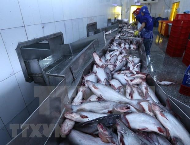 Aumentaran exportaciones de pescado Tra de Vietnam a Estados Unidos hinh anh 1