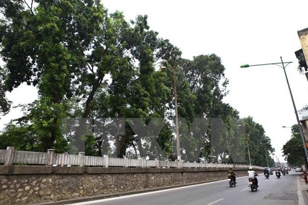 Proyectan plantar en Hanoi 400 mil arboles en 2019 hinh anh 1