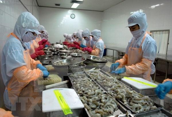Proyecta Vietnam incrementar este ano los ingresos por la exportacion de camarones hinh anh 1