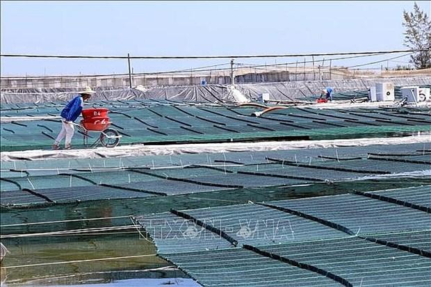 Inauguran en Quang Nam granja camaronera de alta tecnologia hinh anh 1