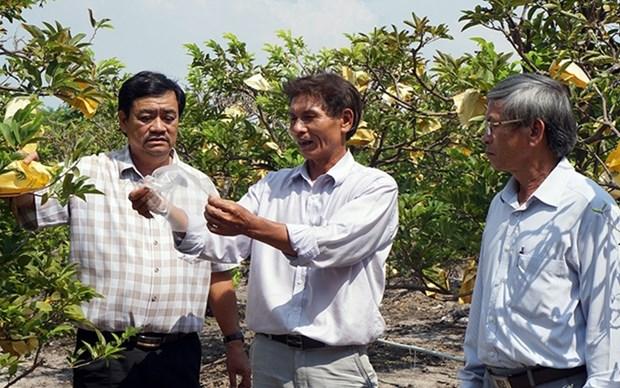 Provincia vietnamita de Tay Ninh hacia una agricultura sostenible hinh anh 1