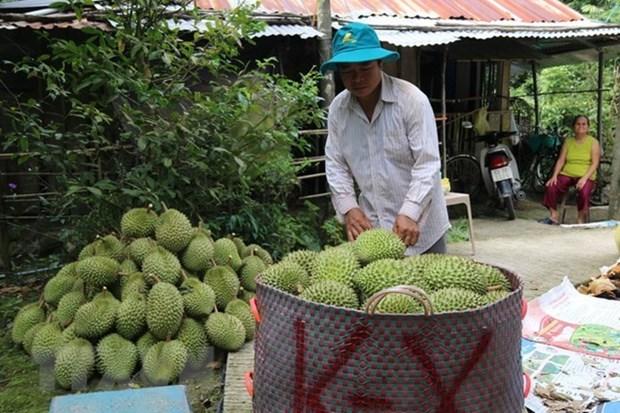 Importara China mas de 100 mil toneladas de arroz vietnamita hinh anh 1