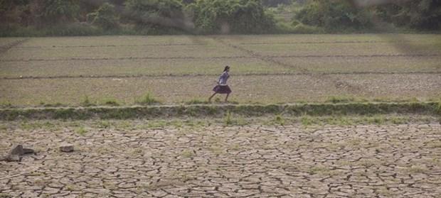 Firma la FAO acuerdo con Myanmar sobre seguridad alimentaria hinh anh 1