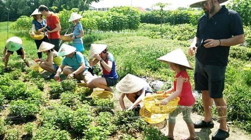 Delta del Mekong de Vietnam apunta a promover el turismo agricola hinh anh 1