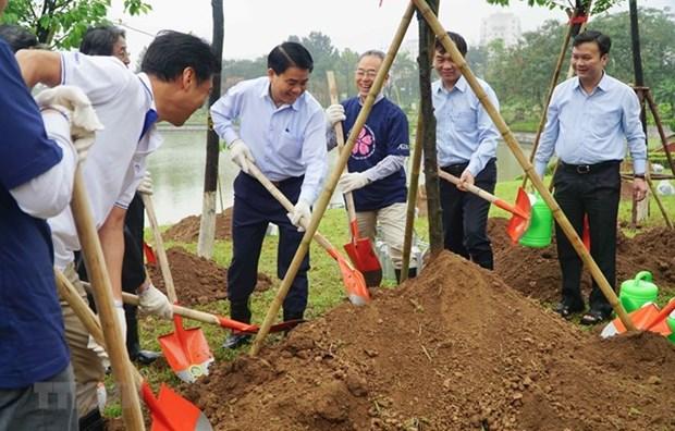 Cultivan en Hanoi mas de mil arboles de cerezo, puente de amistad entre Vietnam y Japon hinh anh 1