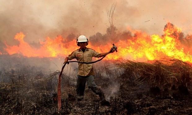 Alto riesgo de incendios forestales en Indonesia hinh anh 1