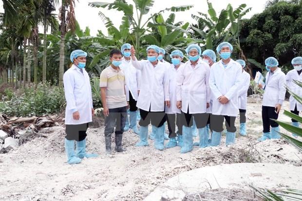 Pide en Vietnam ofrecer asistencia a agricultores afectados por la peste porcina africana hinh anh 1