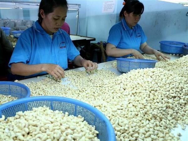 Trabaja Vietnam por construir marca nacional de anacardo hinh anh 1