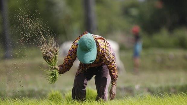 Llama premier de Camboya a diversificar mercados para la exportacion de arroz hinh anh 1