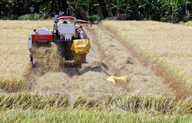 Registra sector agricola de Vietnam superavit comercial en primeros dos meses del ano hinh anh 1